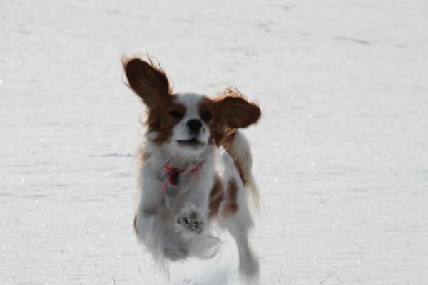 チャコ走る