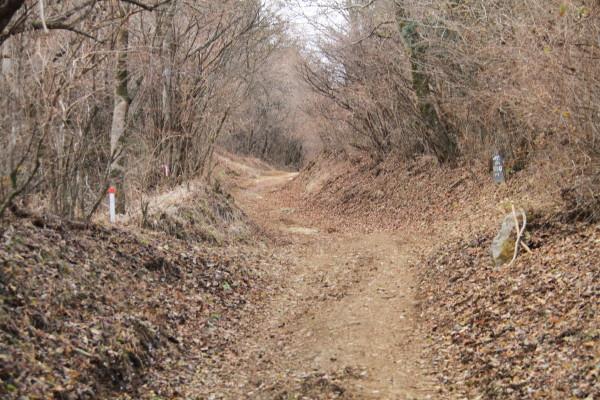 歩き始めは平坦な道