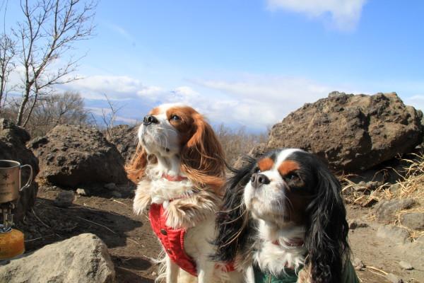 チャコ&エリーと富士山