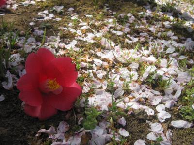 お花見10