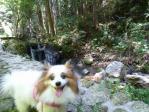 滝まで散策ぴー