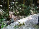 滝まで散策マリ