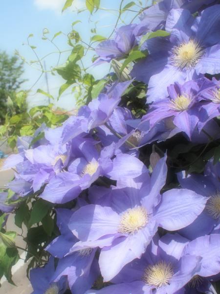 2011-05-14_0849.jpg