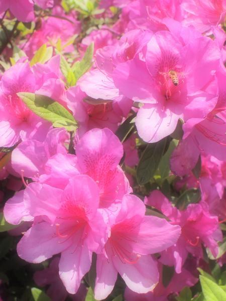 2011-05-14_0855.jpg