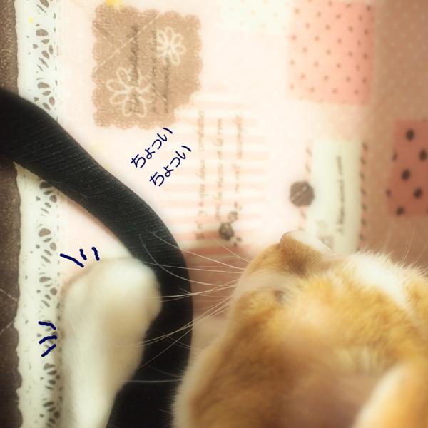 2011-05-14_0897.jpg