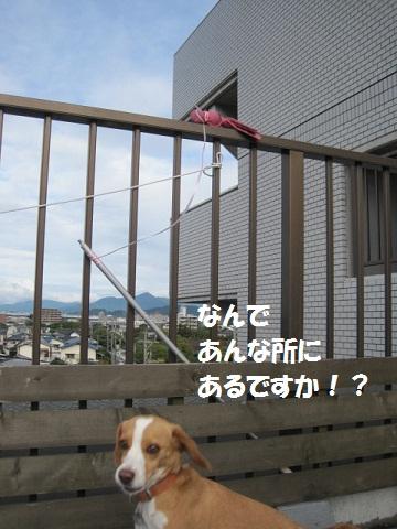 003_20111110090940.jpg