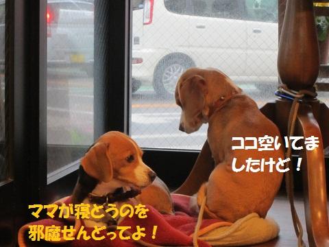 004_20120228204511.jpg