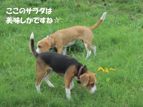 005_20111111073156.jpg