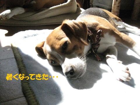 006_20111021063616.jpg