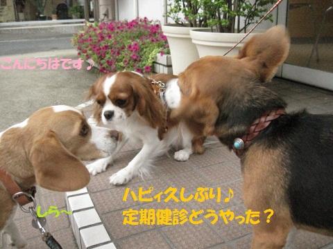 007_20110930150231.jpg