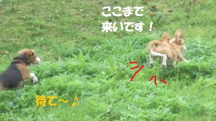 008_20111111073155.jpg