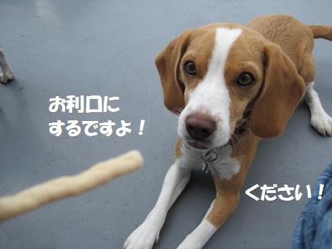 009_20110928191018.jpg