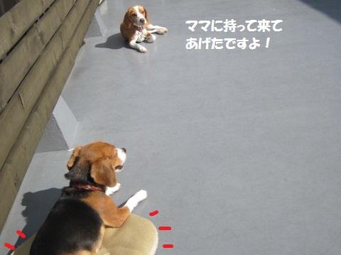 009_20111101080620.jpg
