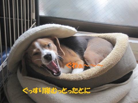 009_20111120081335.jpg