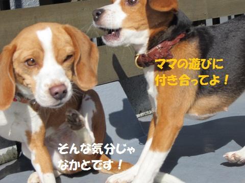 009_20120120070637.jpg