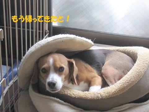 010_20111120081336.jpg