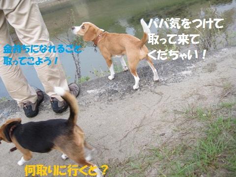 011_20111103141109.jpg