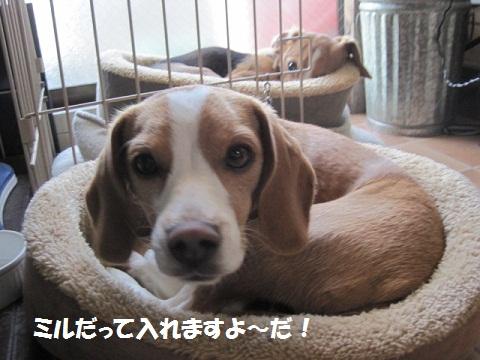 011_20111117114106.jpg