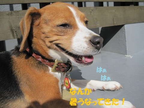 012_20111101080619.jpg
