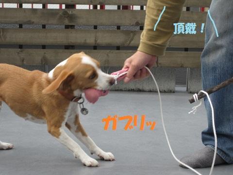 013_20111009144411.jpg