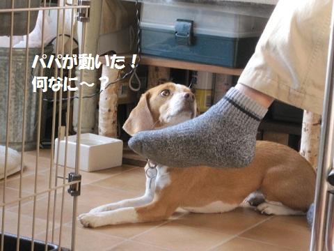 013_20111116104016.jpg