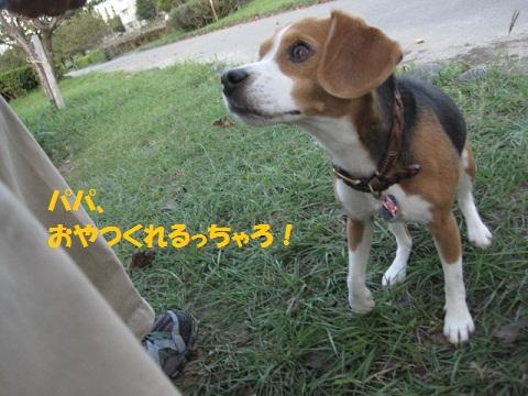015_20111024105036.jpg