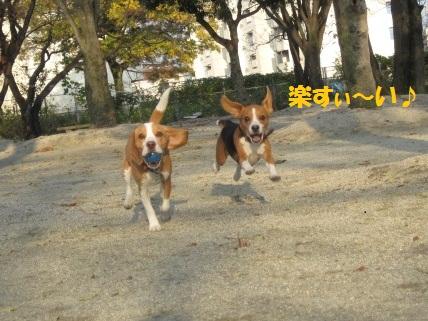 015_20111211083206.jpg