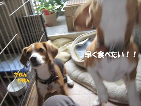 016_20111027091147.jpg