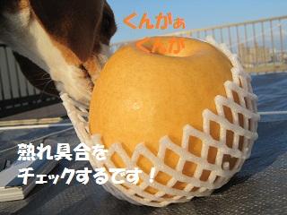 017_20111104091018.jpg
