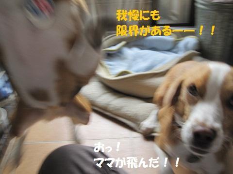 018_20111027091147.jpg