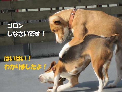 018_20111208084431.jpg