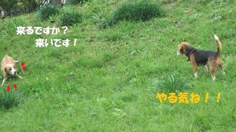 020_20111111073156.jpg