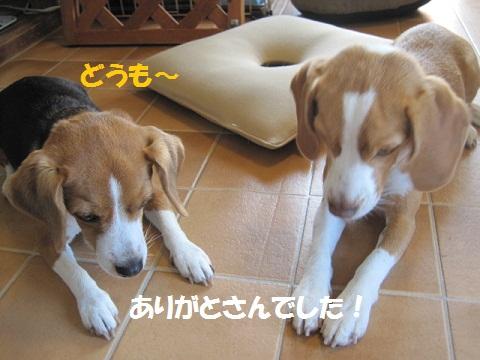 020_20111121075819.jpg