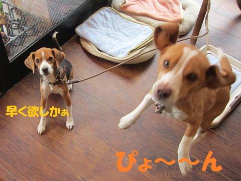 022_20120224060745.jpg