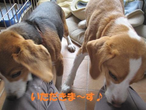 024_20111027092508.jpg