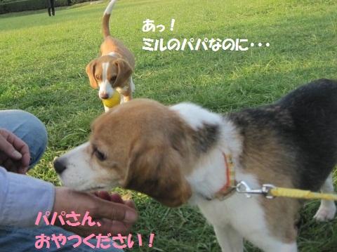 025_20111013065404.jpg