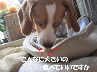 025_20111027092507.jpg