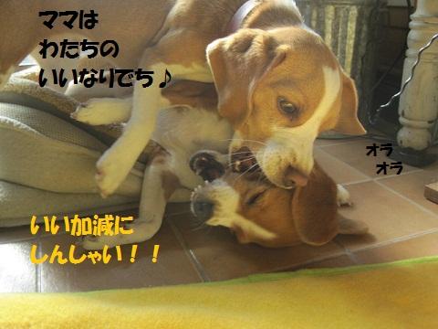 028_20111127080746.jpg
