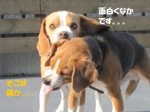 029-1_20111208084430.jpg