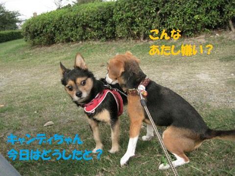 029_20111001205056.jpg