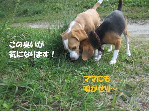 030_20111124064102.jpg