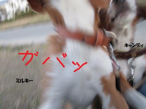 030_20120108072539.jpg