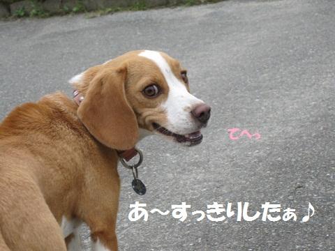 031_20111111074705.jpg