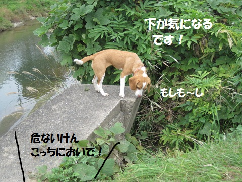 033_20111115074202.jpg