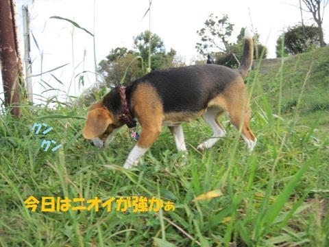 033_20111124064101.jpg