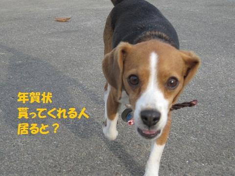 033_20111201073133.jpg