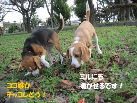 036_20111124064100.jpg