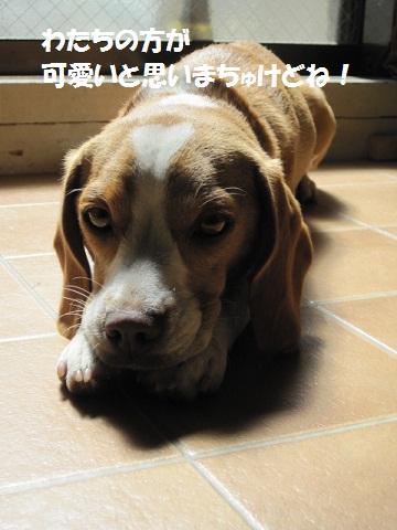 037_20111013072943.jpg