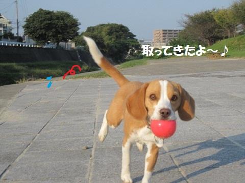 037_20111023133126.jpg