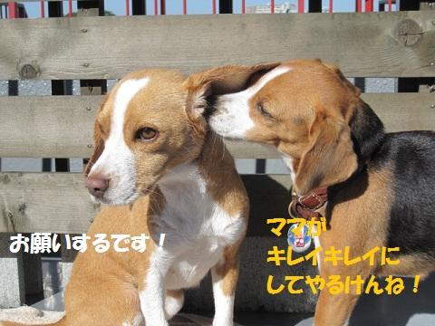 037_20111118080923.jpg